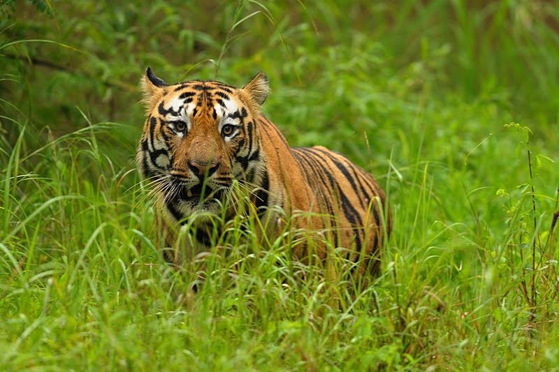 Wildlife tour to Kanha National Park – 7 to 9 Dec'18