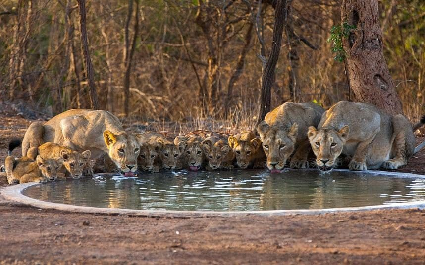 Jungle tour to Sasan Gir on 30 Mar – 01 Apr'18